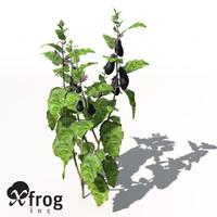 xfrogplants eggplant plant 3d model
