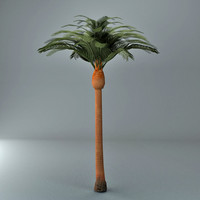 datepalm tree