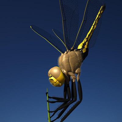 turbo_dragonfly01.jpg