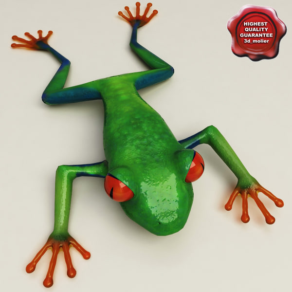 Red eyed tree frog Static