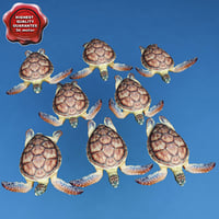 Sea Turtle Chelonia Mydas Poses