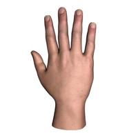 human hand 3d fbx