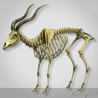 Goat Skeleton