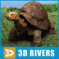 Rare turtle by 3DRivers