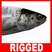 Trout (Rigged)