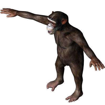 chimp12.jpg