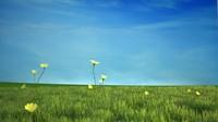CG Grass scene