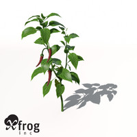 3d xfrogplants chili pepper plant