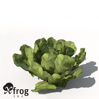 xfrogplants lettuce plant 3d model