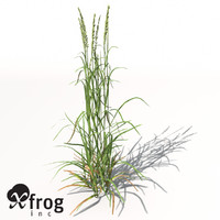 XfrogPlants Ryegrass