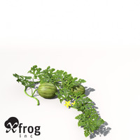 3d xfrogplants watermelon plant water model