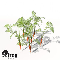 XfrogPlants Carrot