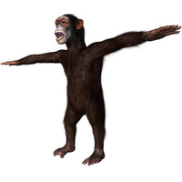 Rigged Chimpanzee with Hair Modifier