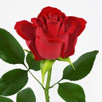 rose flower 3d model