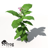 XfrogPlants Tobacco