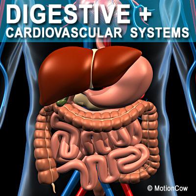Digestive_A.jpg