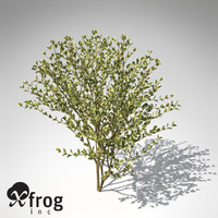 spindles sp shrub tree plants 3d model