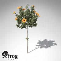 3d model of xfrogplants hibiscus