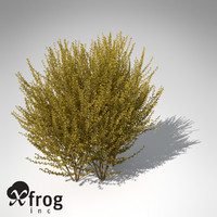 XfrogPlants Forsythia