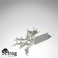 3d xfrogplants lesser periwinkle plant