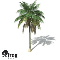 XfrogPlants Kentia Palm