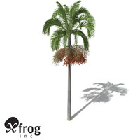 XfrogPlants Carpentaria Palm