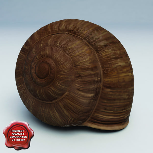 Snail_Shell_0.jpg