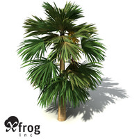 3ds max xfrogplants hillebrand palm