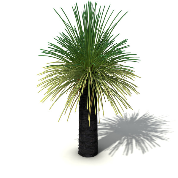 XfrogPlants Australian Grass Tree