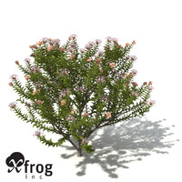 3d model of xfrogplants grey spider flower