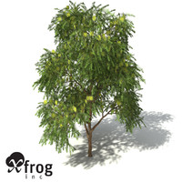 green honey myrtle 3d model