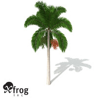 XfrogPlants Foxtail Palm