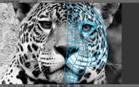 panther cat feline blend free