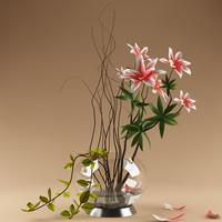 maya ornamental plant