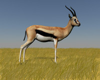 "Thompson""s gazelle"