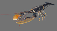 lobster games 3d model