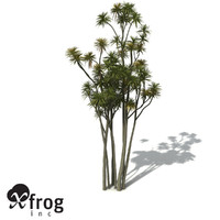 xfrogplants new zealand cabbage 3d model