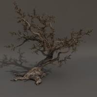 Scary Tree 01