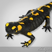 3d salamander lizard model
