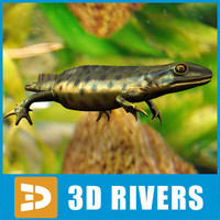 Green Smooth Newt by 3DRivers