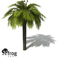 XfrogPlants Tasmanian Treefern
