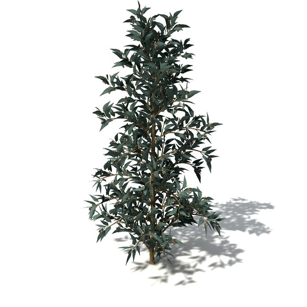 blue-gum eucalyptus tree blue 3d model - XfrogPlants Blue-Gum Eucalyptus... by xfrog