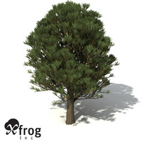 XfrogPlants Totara