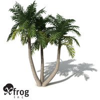 XfrogPlants Bangalow Palm
