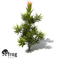 3d model xfrogplants saw banksia tree shrub
