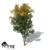xfrogplants silky oak tree 3ds