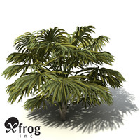 XfrogPlants Australian Cabbage Palm