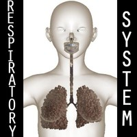 respiratory lungs female 3d model
