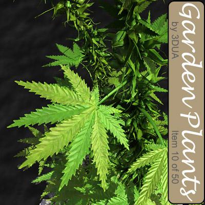 010_cannabis01.jpg