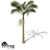 alexandra palm 3d model